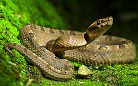 picture of snake, often the subject of phobias