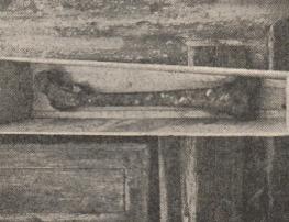 Leg bone belonging to Runki