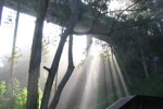 photo of sunbeams in a forest