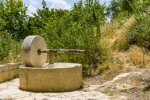 photograph of an old-fashioned olive press in an olive grove