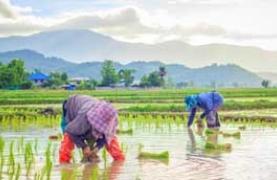 Farming in Thailand